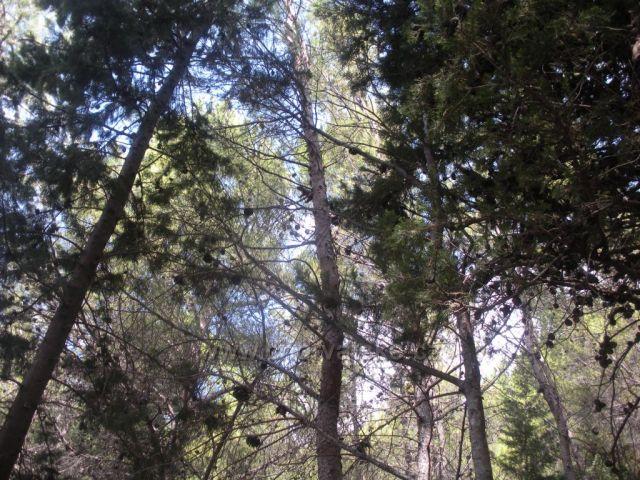 veverka na strome