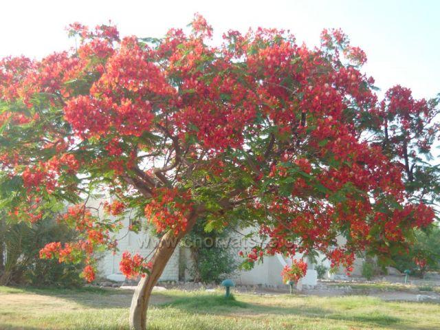 Strom léta 2010