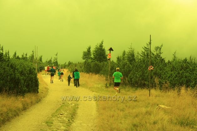 Jesenický maraton