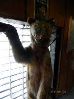 Medved v chatě Prašivá