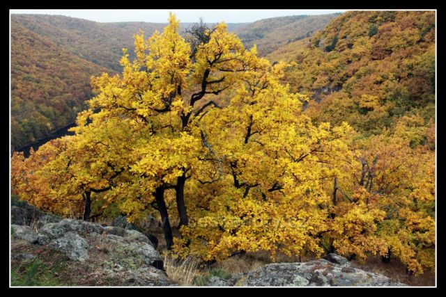 podzim v kaňonu Dyje