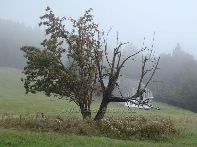 Mlha cestou na Rýchory