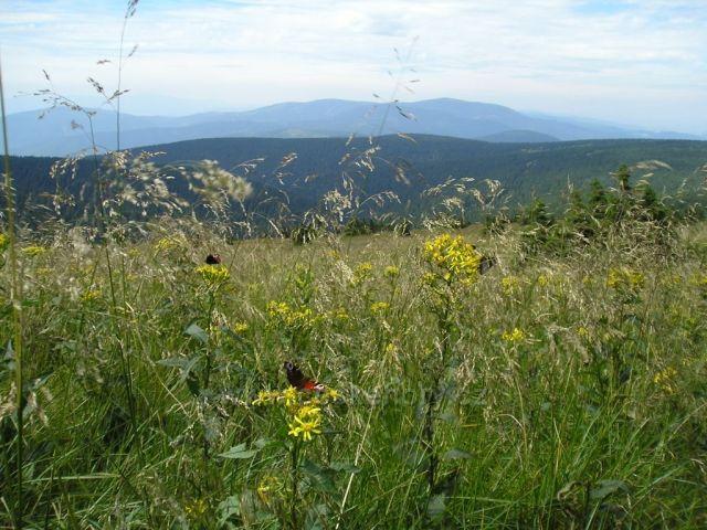 Pohled  severně od Pradědu