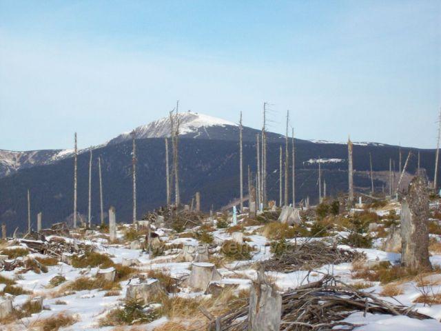 Sněžka  za lesy