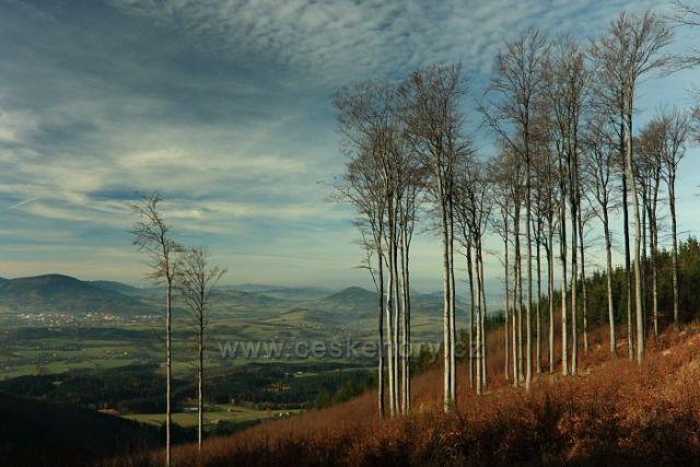 Ondřejnické stromořadí
