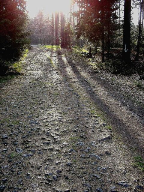 Lesní cesta do podzimu u Devíti skal.