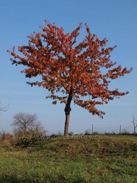 Podzimní pozdrav z Hlinecka