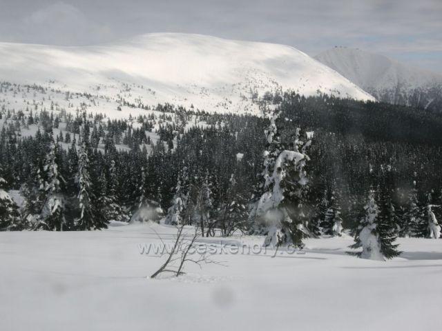 Pohled na Sněžku od Strážného