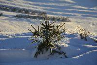 Stromček zimný