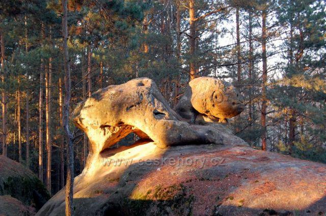 Želva v Boreckých skalách