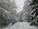 zimní procházka lesem