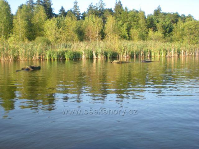 Branžež - Komárovský rybník - Branžež