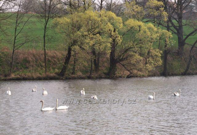 Jarní rybník Petráň