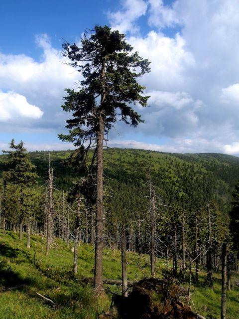 Hrubý Jeseník - pohled na Červenou horu z trasy Vozka - Sedlo pod Vřesovkou (zelená TZ)