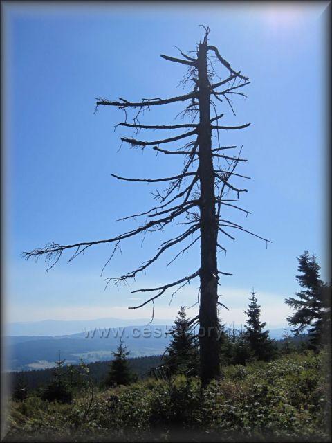 Velká Deštná - Orl. hory