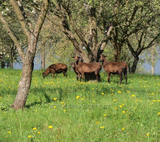 Jarní pastva