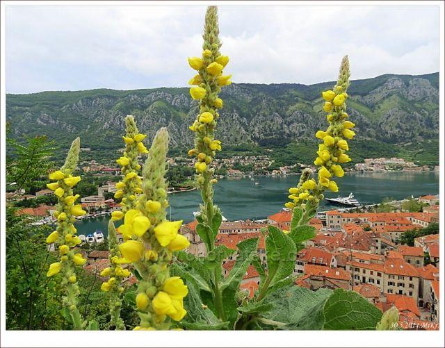 Kotor - ve stoupání na vrchol pevnosti sv,Jana