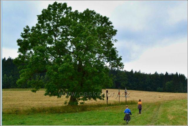 Jasan ztepilý, bývalá obec Morgeland.