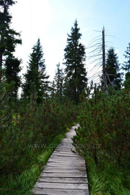 Jizerka rašeliniště