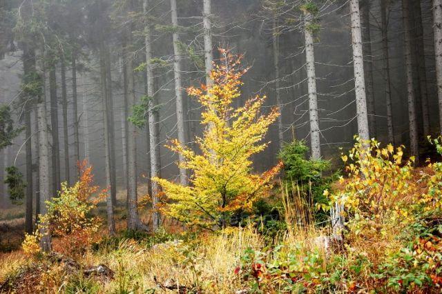 """Podzimní """"zlato"""""""