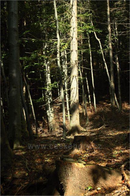 V lese pod Skalkou