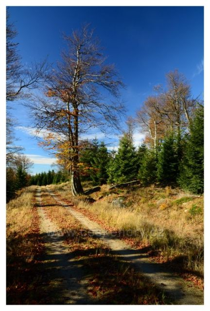 Cesta do sedla Holubníku
