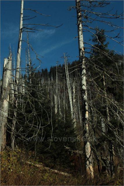 Zbytky lesa v Zadnej Látanej doline