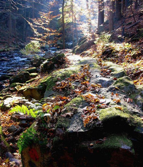 Údolí Doubravy na podzim