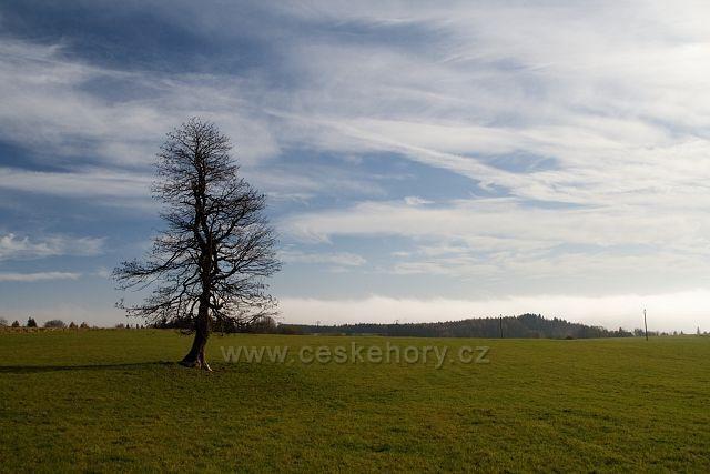 Strom na Bernavě