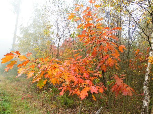 Podzim umělcem barev a kouzel