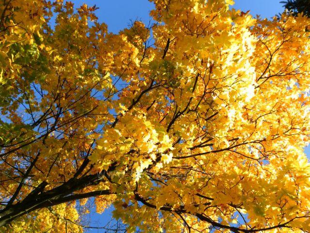 Zlatý oděv podzimního období