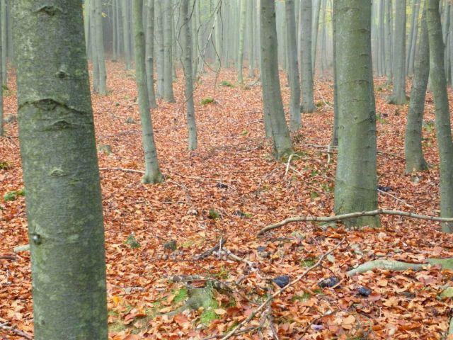 Štědré lesy Broumovska