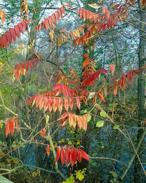 Poslední barvy podzimu