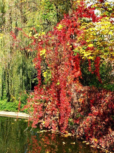 Barevný podzim v Železných horách