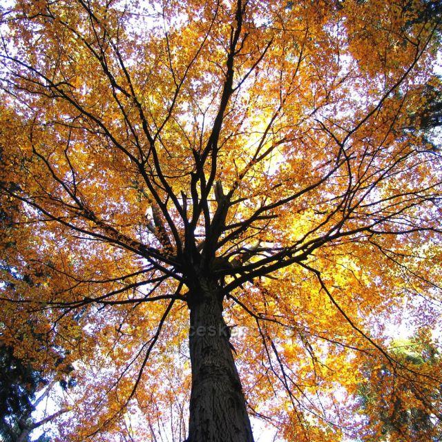 Podzim v bukovém lese na Doubravě