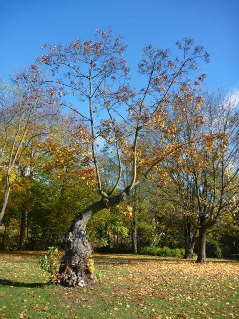 Mariánská louka-můj oblíbený strom