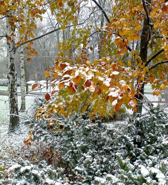 Zima - podzim kombi
