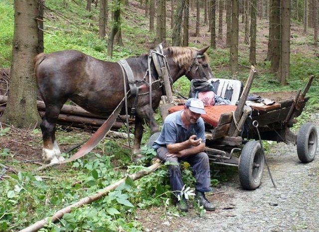 Stahování dřeva je dřina i pro koně