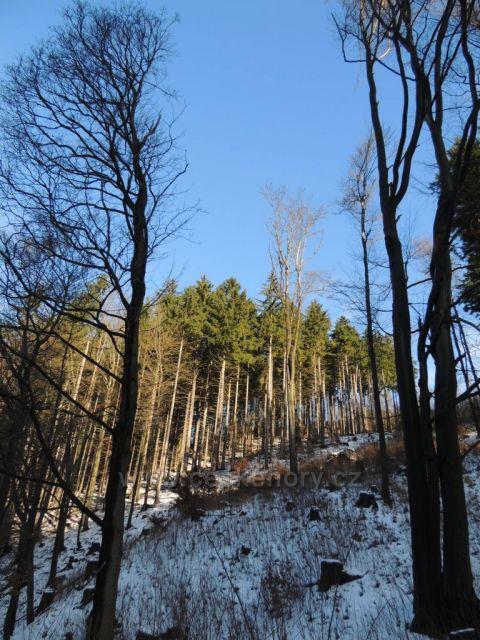 Bezručovo údolí u Chomutova