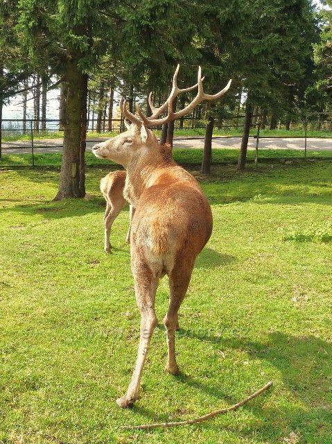 Suchý vrch - jelení obůrka