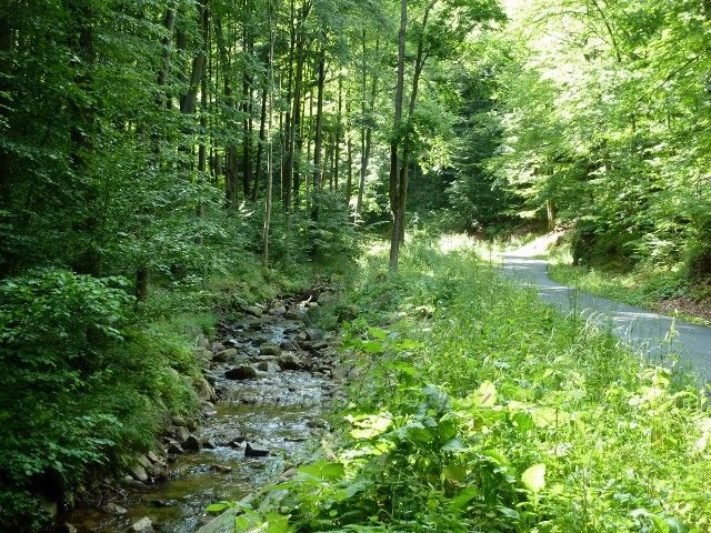 Račí údolí - podél Račího potoka vede silnička