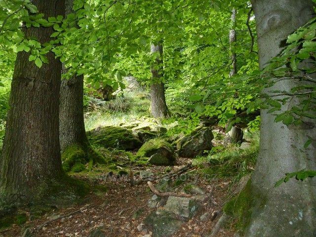 Račí údolí - lesní porost na svahu balvanitého údolí