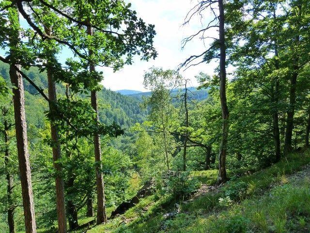 Račí údolí - výhled ze Šálkovy cesty do Račího údolí