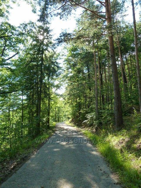 Račí údolí - Šálkova lesní cesta v horní části údolního svahu