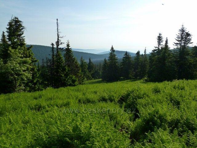 Porost kapradin u červené trasy nad Ovčárnou