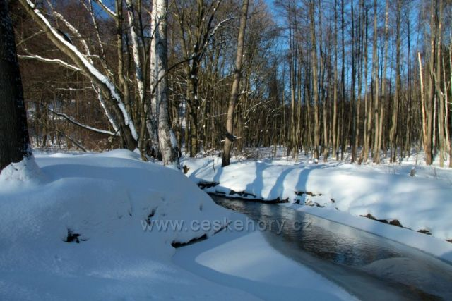 Potok Hutná,pramenící v Křímově v Krušných horách.