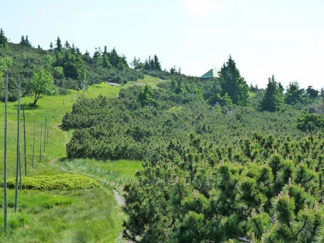 Zpětný pohled k areálu Jelení studánky z hřebenovky na Břidličnou horu