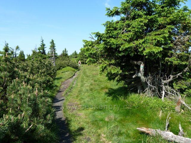 Zelená TZ vede po úbočí Břidličné hory