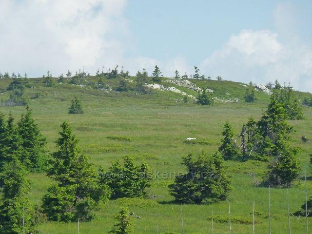 Ostrůvky suti mezi Břidličnou horou a Pecným