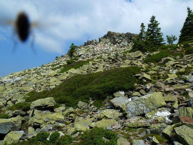 Suťové pole kolem Ztracených skal